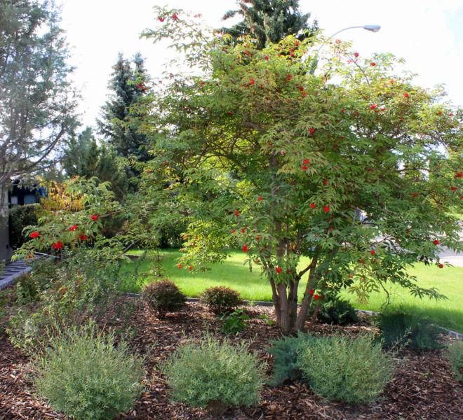 JPL Landscaping Tree Bushes